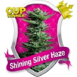 Royal Queen Seeds Shining Silver Haze Feminized (PICK.N.MIX)