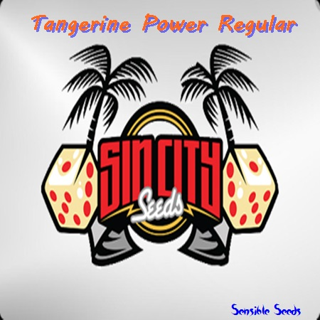 Sin City Seeds Tangerine Power Regular