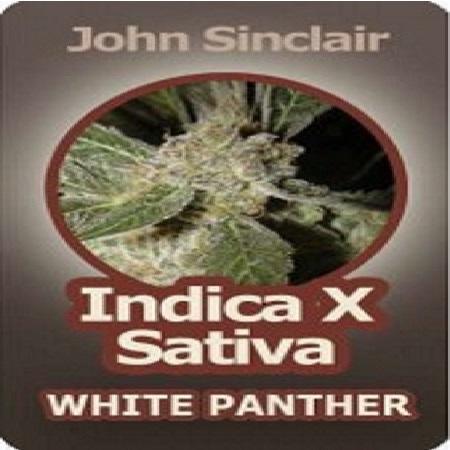 John Sinclair Seeds Indica x Sativa White Panther Feminized