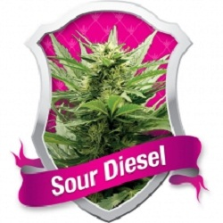 Royal Queen Seeds Sour Diesel Feminized (PICK.N.MIX)
