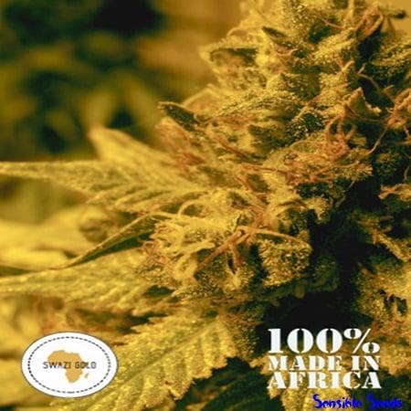 Seeds of Africa Swazi Gold Regular
