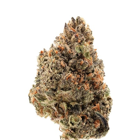 Tangie Punch - Feminized - Growers Choice