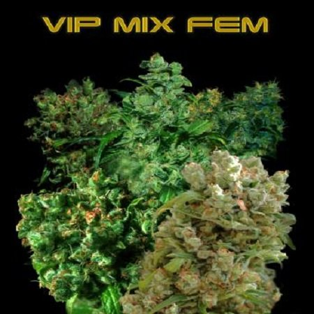VIP Seeds VIP Female Mix Feminized (PICK N MIX)