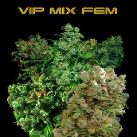 VIP Seeds VIP Female Mix Feminized (PICK N MIX)