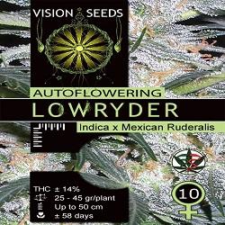 Vision Seeds Lowryder Auto Feminised