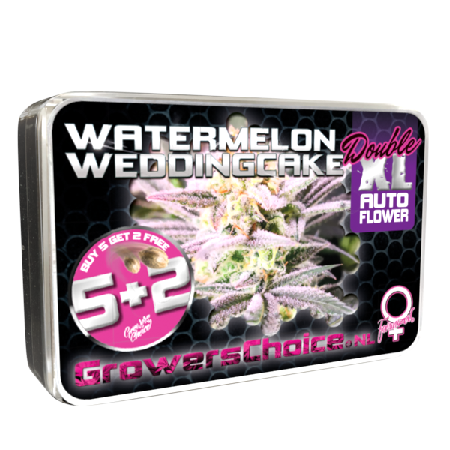 Watermelon Weddingcake Double XL Auto - Feminized - Growers Choice