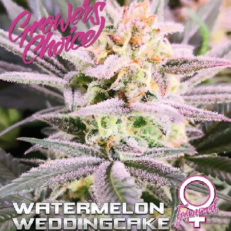 Watermelon Wedding Cake - Feminized - Growers Choice