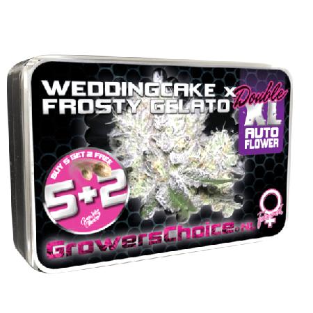 Weddingcake x Frosty Gelato Double XL Auto - Feminized - Growers Choice