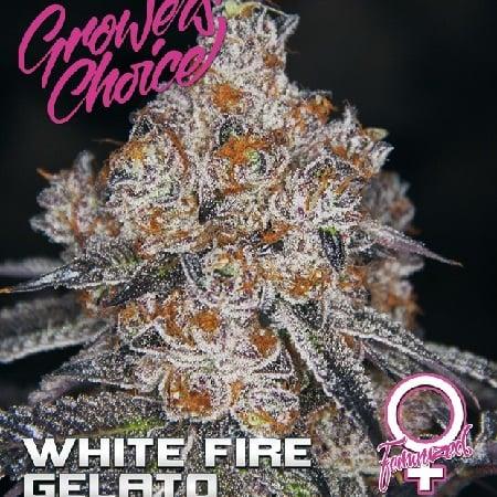 White Fire Gelato - Feminized - Growers Choice