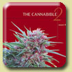 Cannabible 2
