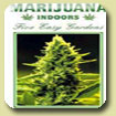 Marijuana Indoor- Five Easy Gardens