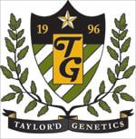 Taylor'd Genetics  Dreamcatcher Feminised