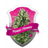 Royal Queen Seeds Power Flower Feminized (PICK.N.MIX)