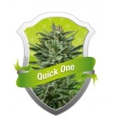 Royal Queen Seeds Quick One Feminized (PICK.N.MIX)