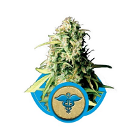 Royal Medic – Feminized – Royal Queen Seeds