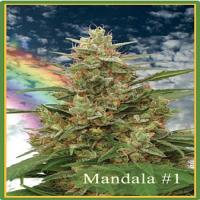 Mandala Seeds Mandala #1 Regular