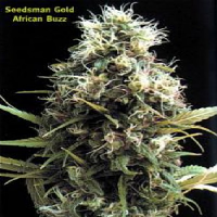 Seedsman Seeds African Buzz Regular