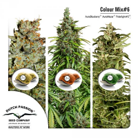 Dutch Passion Seeds Colour Mix #6 Auto Feminized