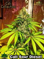 Cali Sour Diesel - Feminized - BSB Genetics