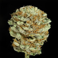 Dinafem Seeds Blue Kush Feminized