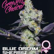 Blue Dream Sherbet - Feminized - Growers Choice