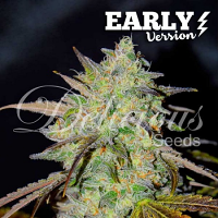 Delicious Seeds Marmalate Early Version Feminized