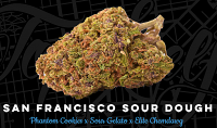 Top Shelf Elite Seeds San Francisco Sour Dough Feminized