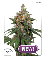 Dutch Passion Seeds HiFi 4G Feminized