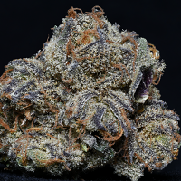 Professor Trichome Bulk Seeds Grandaddy Purple Feminized