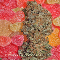 Mandala Seeds Fruitylicous Feminized Out of Stock Till 2015