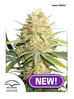 Dutch Passion Seeds Lemon Zkittle® Feminized