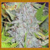 Dr Krippling Seeds Delhi Friend Feminised (PICK N MIX)