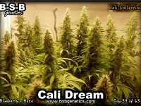 Cali Dream - Feminized - BSB Genetics