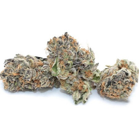Dispensario Seeds Rainbow Sherbert Feminized