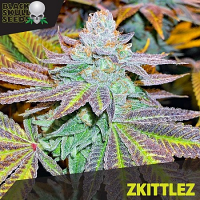 Black Skull Seeds Zkittlez Feminized