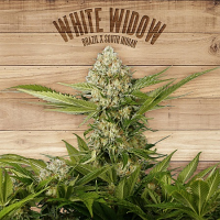 The Plant Organic Seeds White Widow Feminized