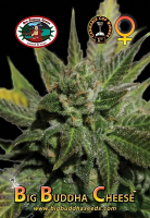 Big Buddha Seeds Big Buddha Cheese Feminized