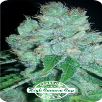 Dispensario Seeds Eter Express Feminized