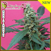 Dr Krippling Seeds Mong-U-Mental Feminized (PICK N MIX)