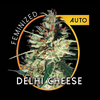 Vision Seeds Delhi Cheese Auto Feminized