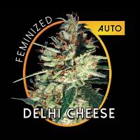 Vision Seeds Goudas Grass Auto Feminized