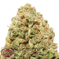 Heavyweight Seeds Strawberry Cake Feminized