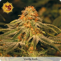 Barney's Farm Seeds Vanilla Kush Feminized (PICK N MIX)