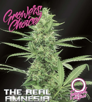 The Real Amnesia Auto - Feminized - Growers Choice
