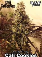 Cali Cookies - Feminized - BSB Genetics