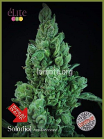 Solodiol CBD Auto - Feminized - Elite Seeds