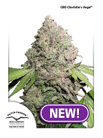 Dutch Passion Seeds CBD Charlotte's Angel Feminized