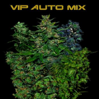 VIP Seeds VIP Auto Mix Feminized