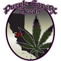 Purple Caper Seeds Key Lime Zkittlez Regular