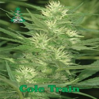 Reserva Privada Seeds Cole Train Feminised